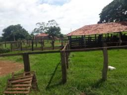 Fazenda 80 Alqueires 72Km Jatai Cultura