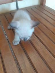 Lindos gatinhos pra adoção