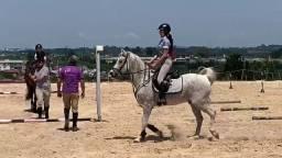 Passeio a cavalo - Aulas de equitação - Venda de Cavalos Hospedagem Cocheira Baia Hipismo