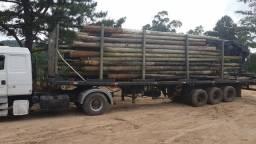 Carga fechada postes de eucalipto tratado!! confira!!
