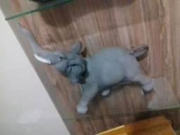 Vendo elefante