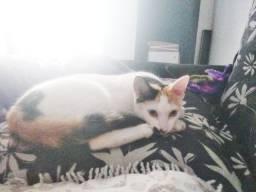 Gatinha fêmea castrada para adoção
