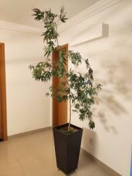 Bambú Mossô com vaso móvel