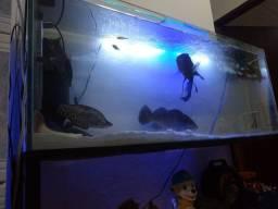 Vendo ou troco aquário