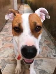 Doação de cachorro resgatado!