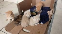 Vendo filhotes de gato