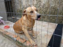 Doação: Sr. Batata ( cachorro)