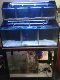 Bateria para peixes