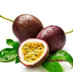 Polpas de frutas direto do produtor