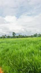 Formosa Brasília DF Fazenda 36 Alqueires Cód. FDF-1