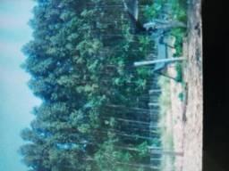 Vendo eucalipto para lenha