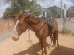 Cavalo com sela