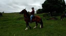 (Cavalo) Mangalarga