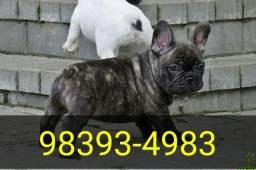 Canil Bulldog Francês