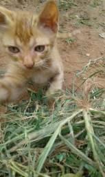 Doaçao de lindos gatos