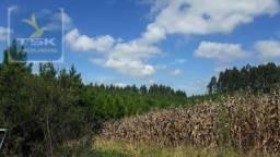 Ch0285 área toda reflorestada 15.000 arvores em agudos do sul medindo 121.000 m²