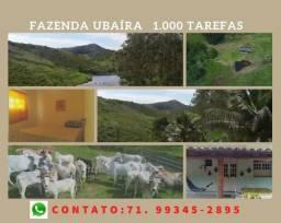 Imperdível: Fazenda com 1.000 tarefas em Ubaíra, excelente investimento
