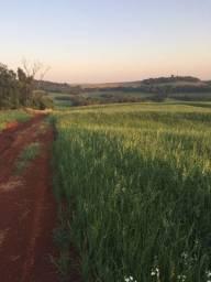 Fazenda 38 alq para soja