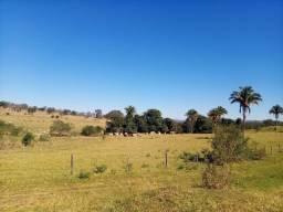 Fazenda de 184 alqueires dupla aptidão no Município de Caldas Novas Goiás
