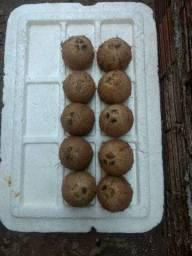 10 cocos