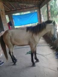 Vende se esse cavalo tem macha 1.200 se tive interessado  chama no zap *