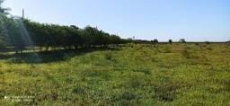 Hectares de terra em Nova Santa Rita-Apenas 28.300 cada hectare(mín 3 hect)