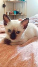 >> ADOÇÃO RESPONSÁVEL << Tenho uma Gatinha para adoção!