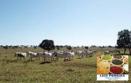 FAZENDA À VENDA EM JARAGUARI - MS - DE 1.000 HECTARES