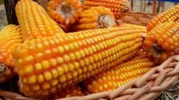 Venda de milho ensacado...