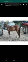 Vendo este cavalo