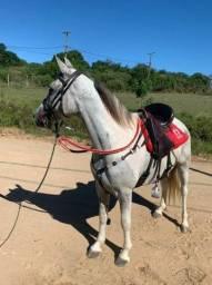 Cavalo MM puro com registro