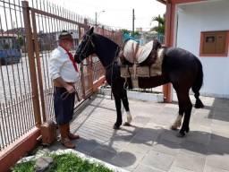 Vende-se linda égua crioula registrada