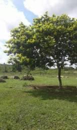 Vende um terreno em taboca