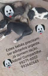 Cachorrinhos para adoção urgente