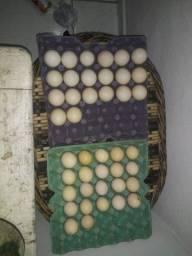 Ovos de pata galados