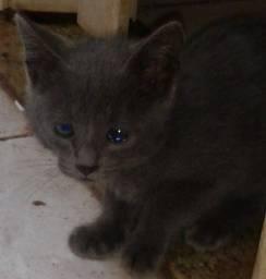 Filhotes de gatinhos pra venda