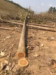 Toras de Teca - madeira linda e resistente