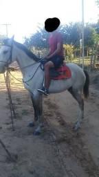 Égua boa toda de picado R$1,700