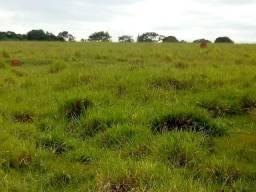 Fazenda de 870 Hectares, terra mista