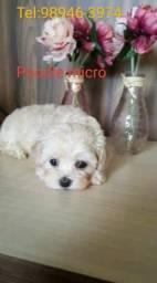 Poodle micro aceito cartão