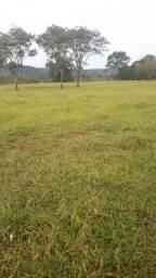 Fazenda formada porteira fechada Beserra BR 020 Formosa