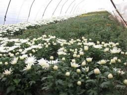 Terra preta preparada para mudas, planta,plantas, flores,flor campo floricultura