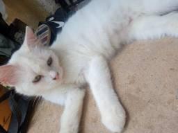 Doa-se gatinha branca