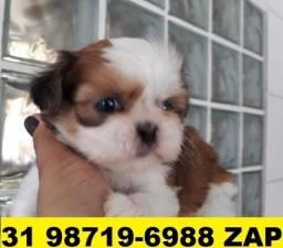 Canil Filhotes Cães Premium BH Shihtzu Poodle Lhasa Beagle Yorkshire Maltês Pug
