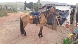Cavalo de carroça e charrete