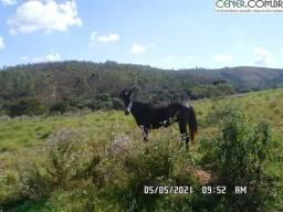 Título do anúncio: 2084/Fazenda de 100 ha bem localizada em Carandaí - MG
