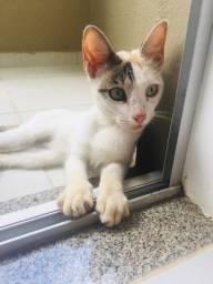 Doação de gata fêmea (garantimos a castração)