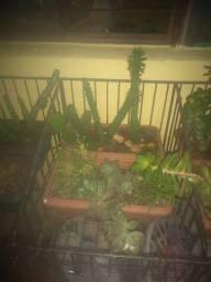 Todas as plantas da foto pôr 150