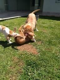 Doa-se filhotes cachorrinhos