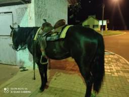 Cavalo Quarto de Milha P.O registrado!!!